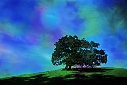 True Colors - Limited Edition Photographic Art by Christopher Strong